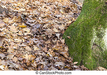tree moss autumn