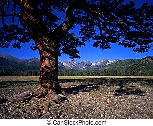 Tree Mountains&Mtns.