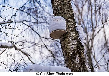 Tree mushroom on a tree covered with snow
