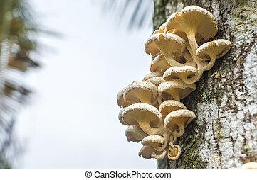 Tree mushroom with bokeh background