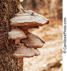 tree mushrooms on a tree trunk