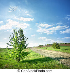 Tree near a country road