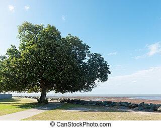 Tree near beach