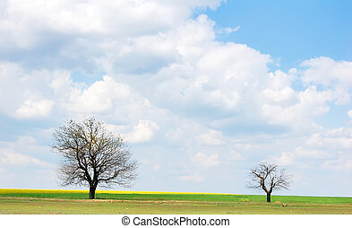 Tree near field