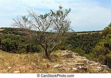 Tree near ravine in Alta Murgia National Park (Parco ...