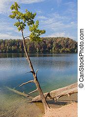 Tree near the lake.