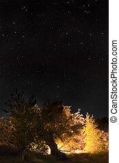 night sky vertically
