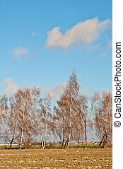 tree of birchs