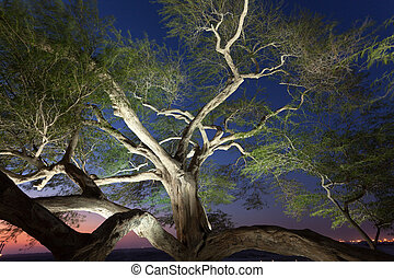 Tree of Life illuminated at night. Kingdom of Bahrain, Middle East