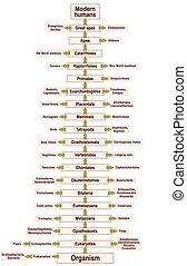 Tree Of Life Human Evolution