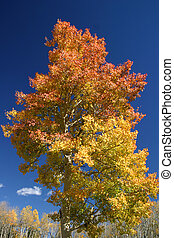 Tree of Many Colors