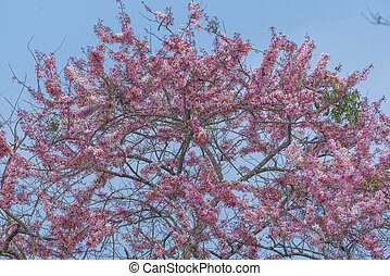 Tree of pink flower