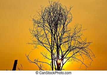 Tree of the evening.