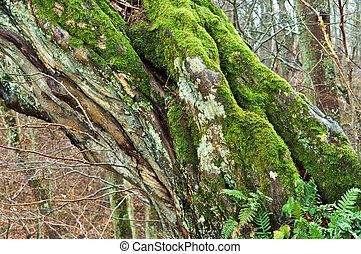 tree old broken wet fallen the moss on the tree