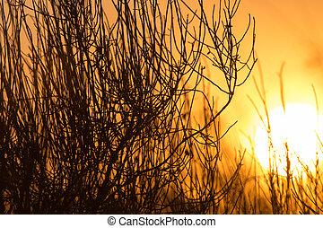 tree on a background of beautiful sunrise