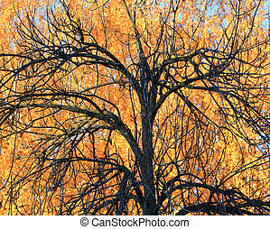 Tree on a background of yellow foliage