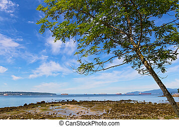 Tree on a beach during low tide against blue sky with clouds.