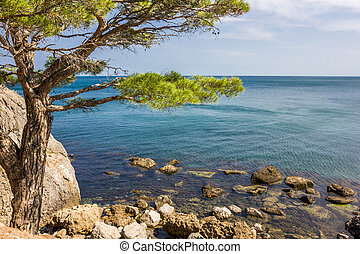 tree on a cliff near the sea