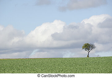 Tree on a field with road