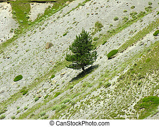 Tree on a flank of hill
