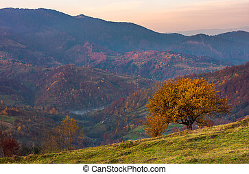 tree on a grassy hillside in autumn mountains. beautiful...