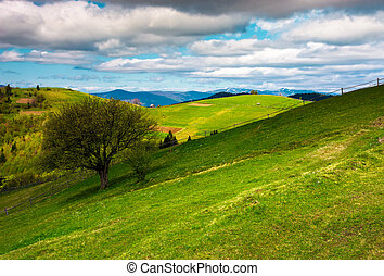 tree on a grassy slope of Carpathian rural area. beautiful...