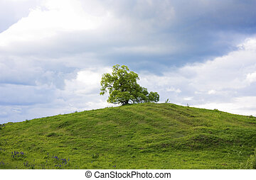 tree on a green hill