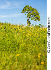 tree on a green meadow with a blue sky