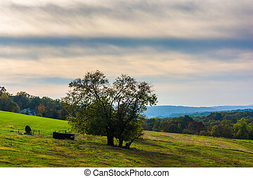 Tree on a hill in rural Lancaster County, Pennsylvania.