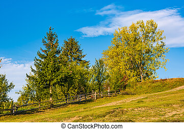 tree on a hillside behind the fence. beautiful countryside...