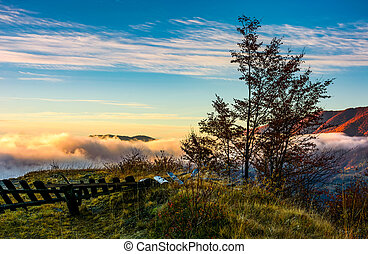 tree on a hump above the ridge and clouds - tree on a hump...