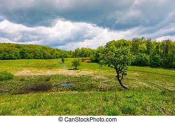 tree on a hump over the grassy meadow among the forest....