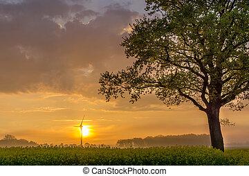 Tree on a raps field at sunrise