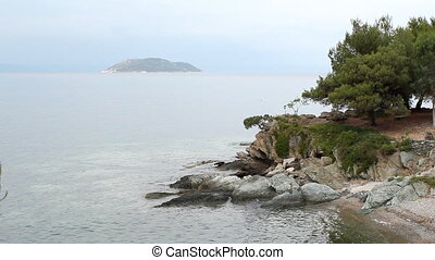 tree on a rock above the sea