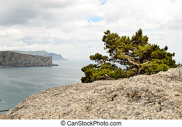 Tree on a rocky cliff overlooking the ocean