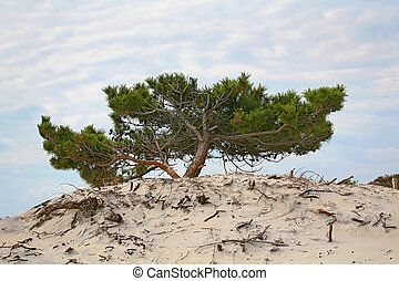 tree on a sand hill