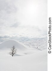 Tree on a snow