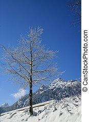 Tree on a snowy mountain