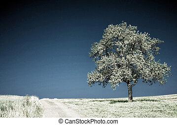 tree on a way with a blue sky