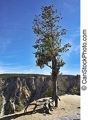 Tree on abrupt breakage of the river Yellowstone