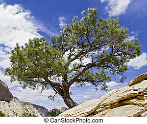 "Tree on Angels Landing, Zion NP - A \""Bonsai\\\"" shaped..."