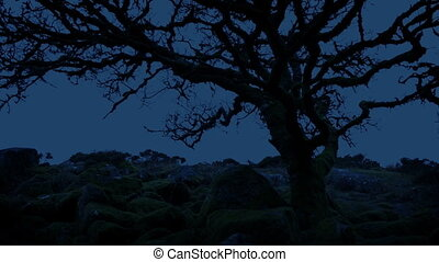 Tree On Barren Mountain Top At Dusk - Gnarled old tree on ...