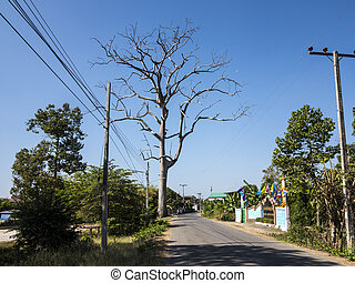 Tree on blue sky background