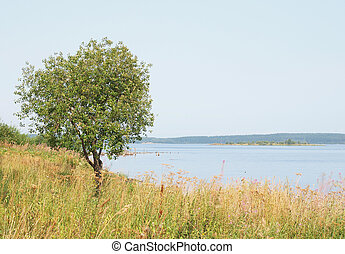 Tree on coast of lake