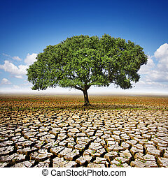 Tree On Dry Land - Single olive tree planted in the center...