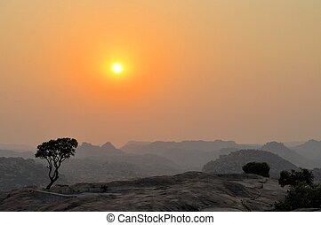 Tree on granite mountain in Hampi, India