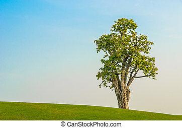 tree on grass field in blue sky