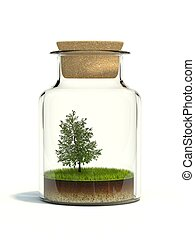 Tree on grass in the bottle isolated on white