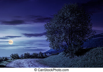 tree on grassy hillside by the road at night