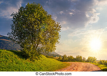 tree on grassy hillside by the road at sunset - tree on...